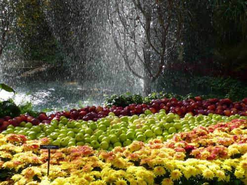 Apples display at Bellagio Gardens