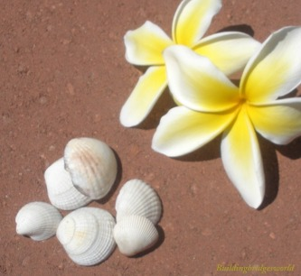 radiant flowers and seashells
