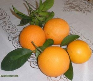 my garden oranges